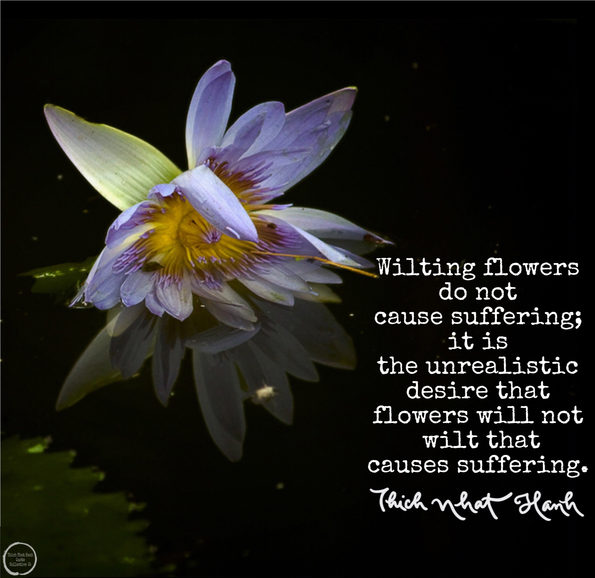 wilting flowers do not cause suffering thich nhat hanh quote